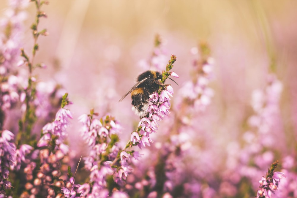 tilt shift lens photography of bee on top of pink flower