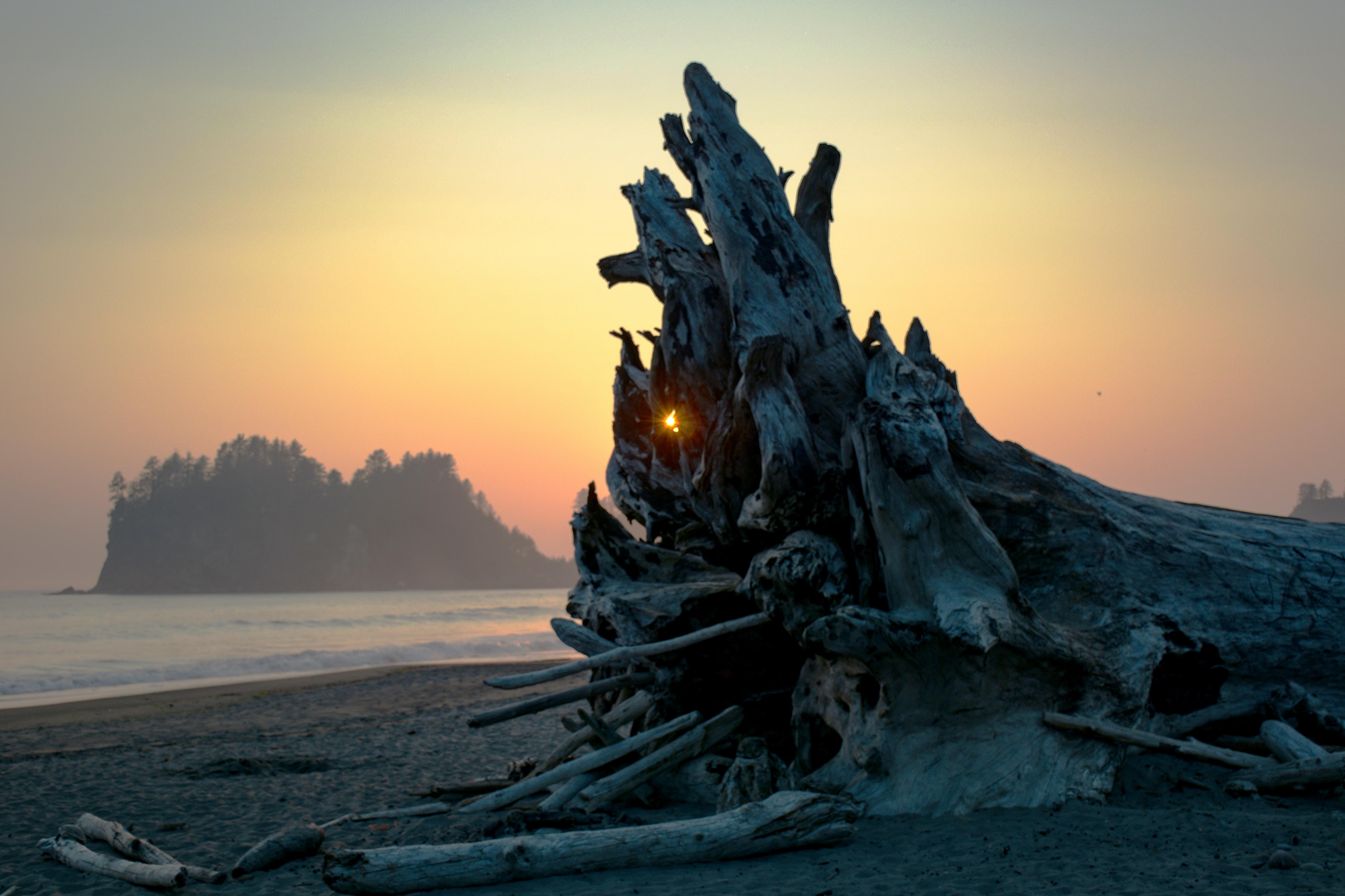 gray driftwood on seashore near body of water