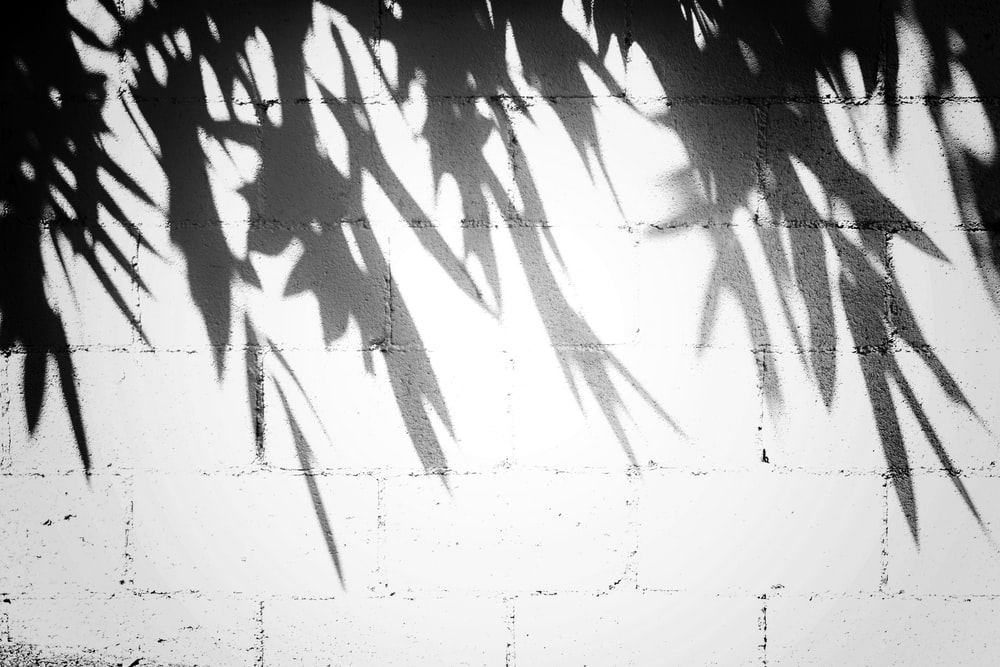 silhouette of leaves by the wall