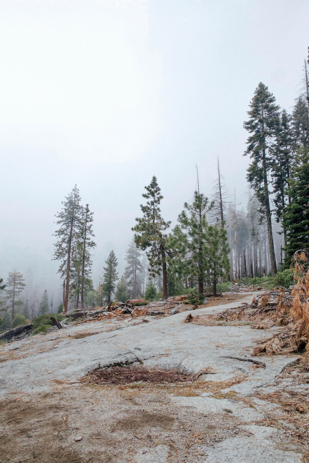 Hiking through the Sequoia National Park was a truly amazing experience. At one point the fog had settled all around us and it felt as though we were in a cloud.
