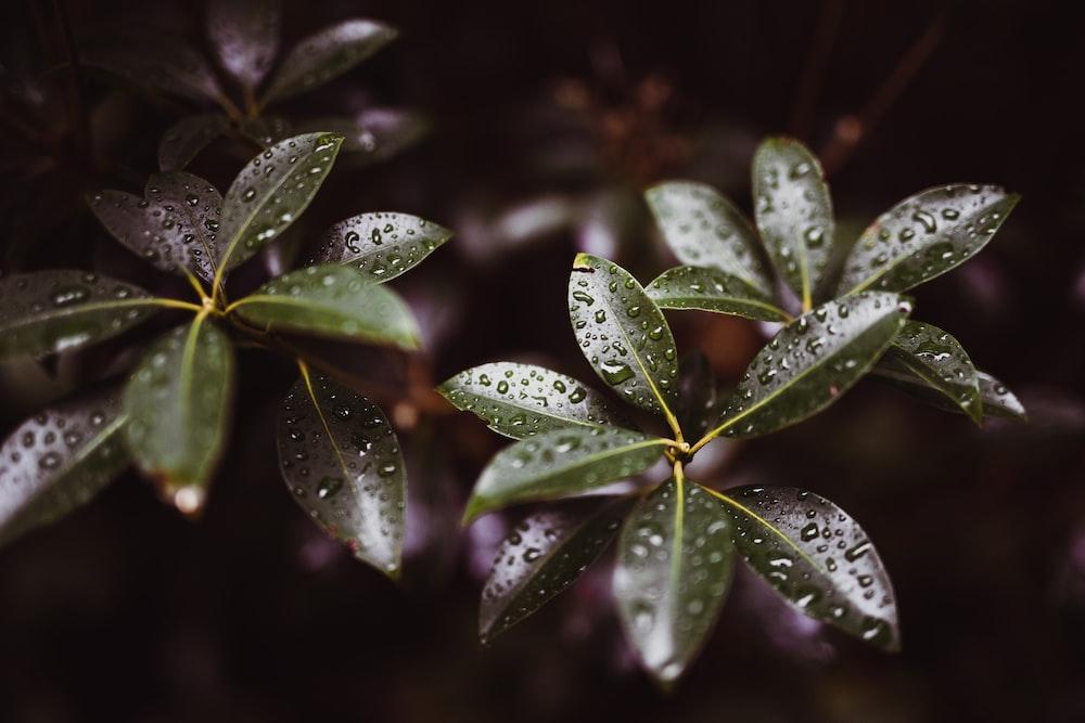 macro shot photography of leaves