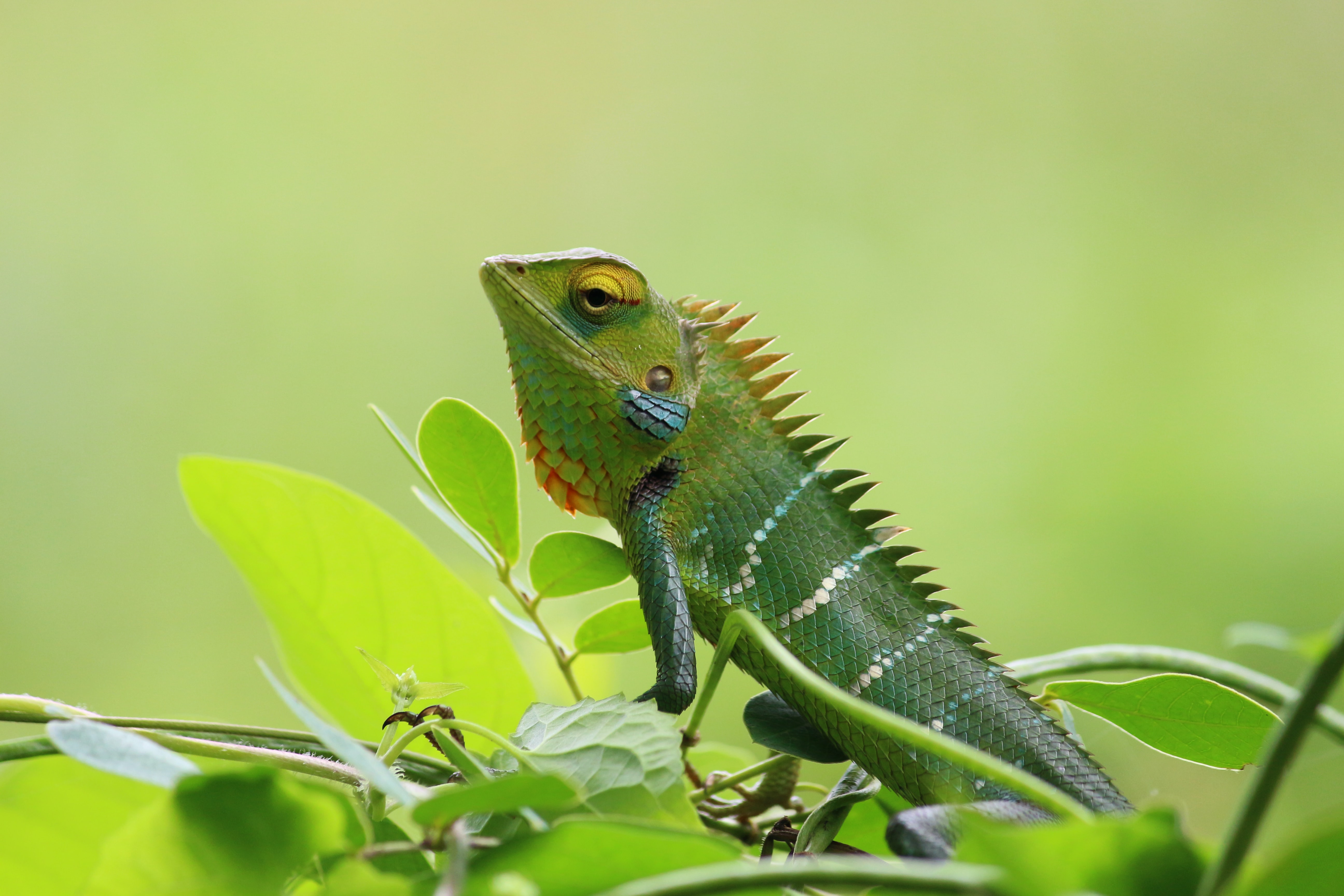 green iguana on green leaf
