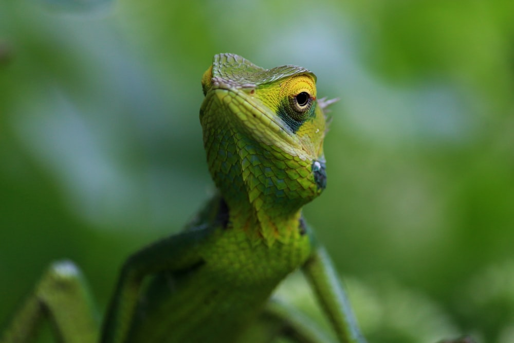 shallow shot of green lizard