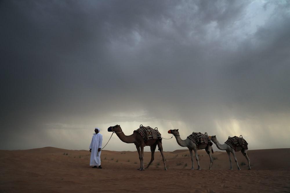 three beige camels