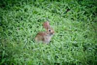 The Great Bunny Adventure bunnies stories