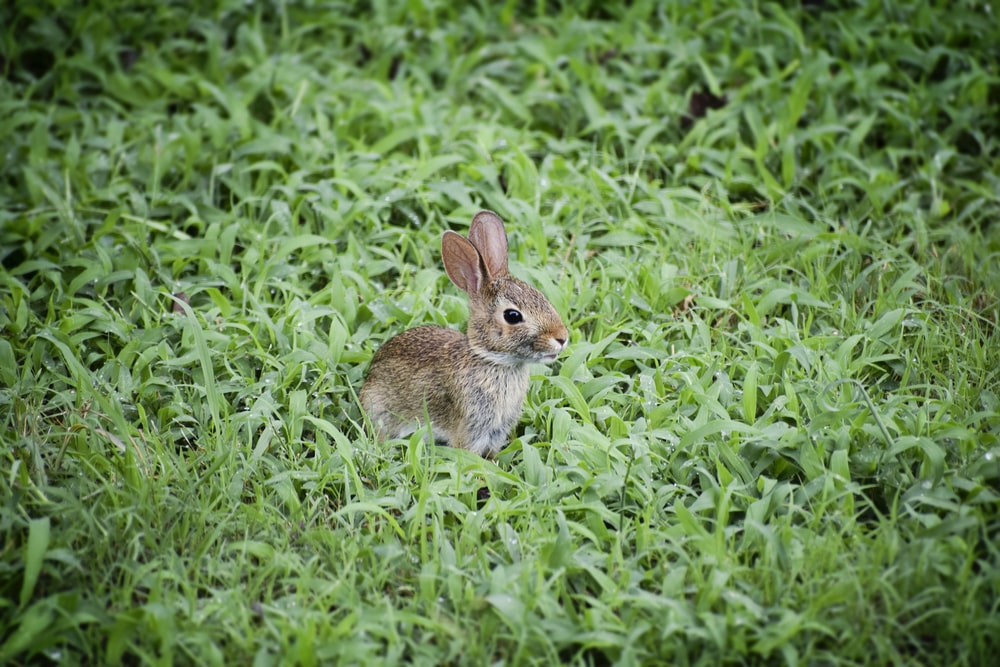 selective focus photography of brown rabbit on grass field
