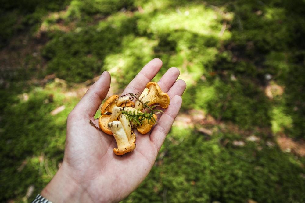 person holding orange mushrooms