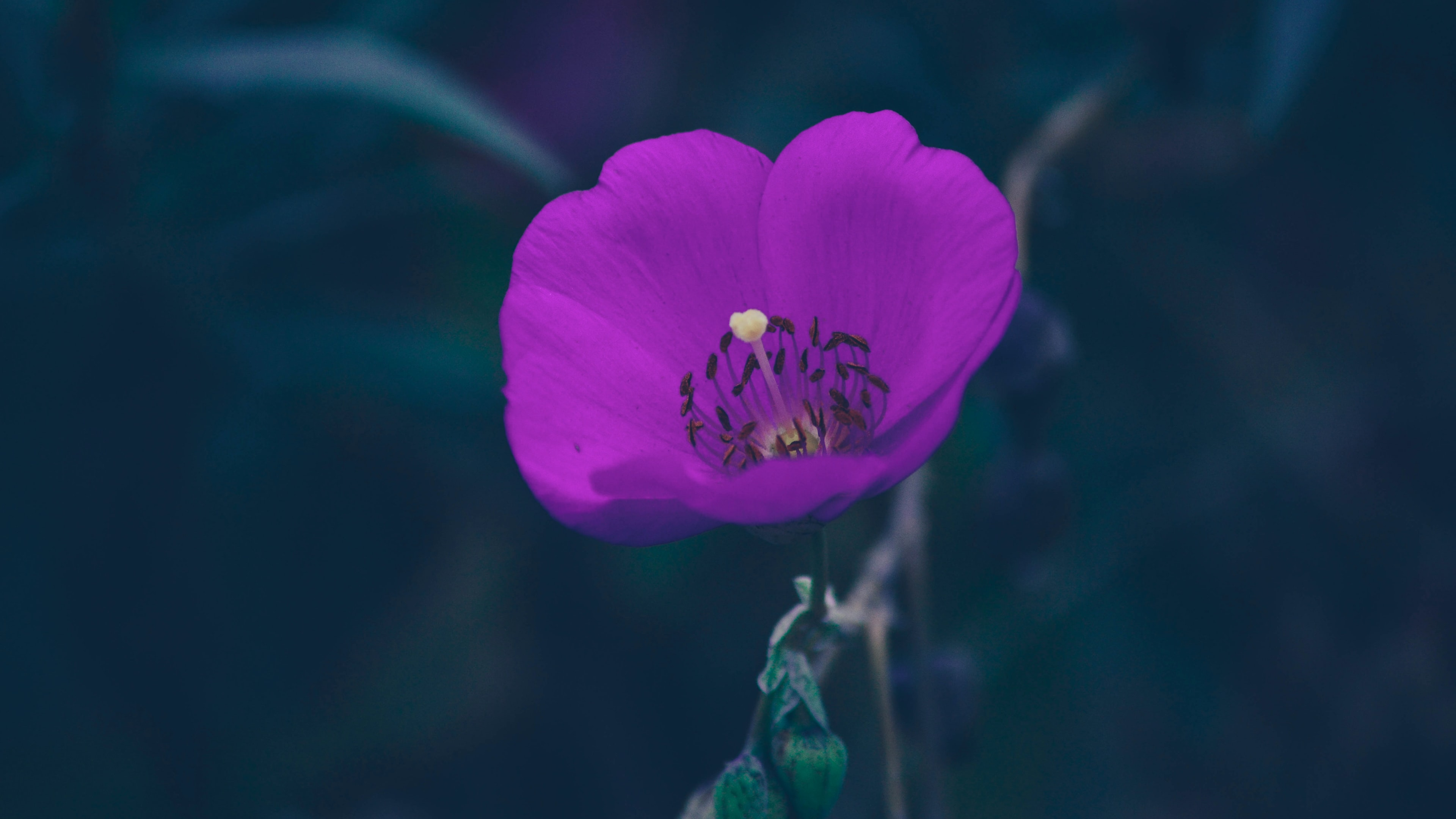 closeup photography purple petaled flower