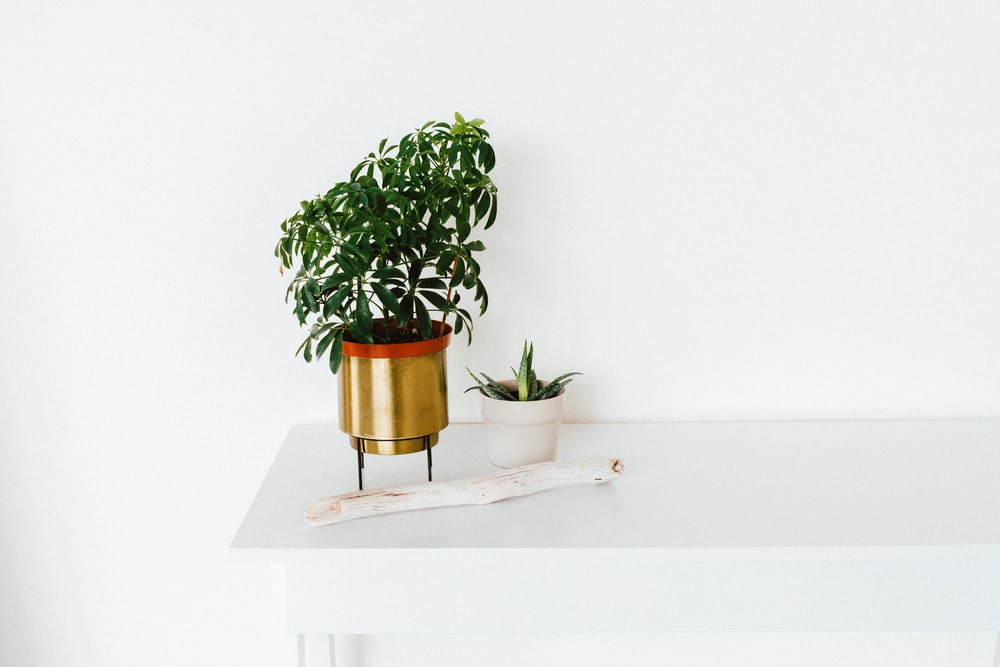green leafed plant in gold pot on white table