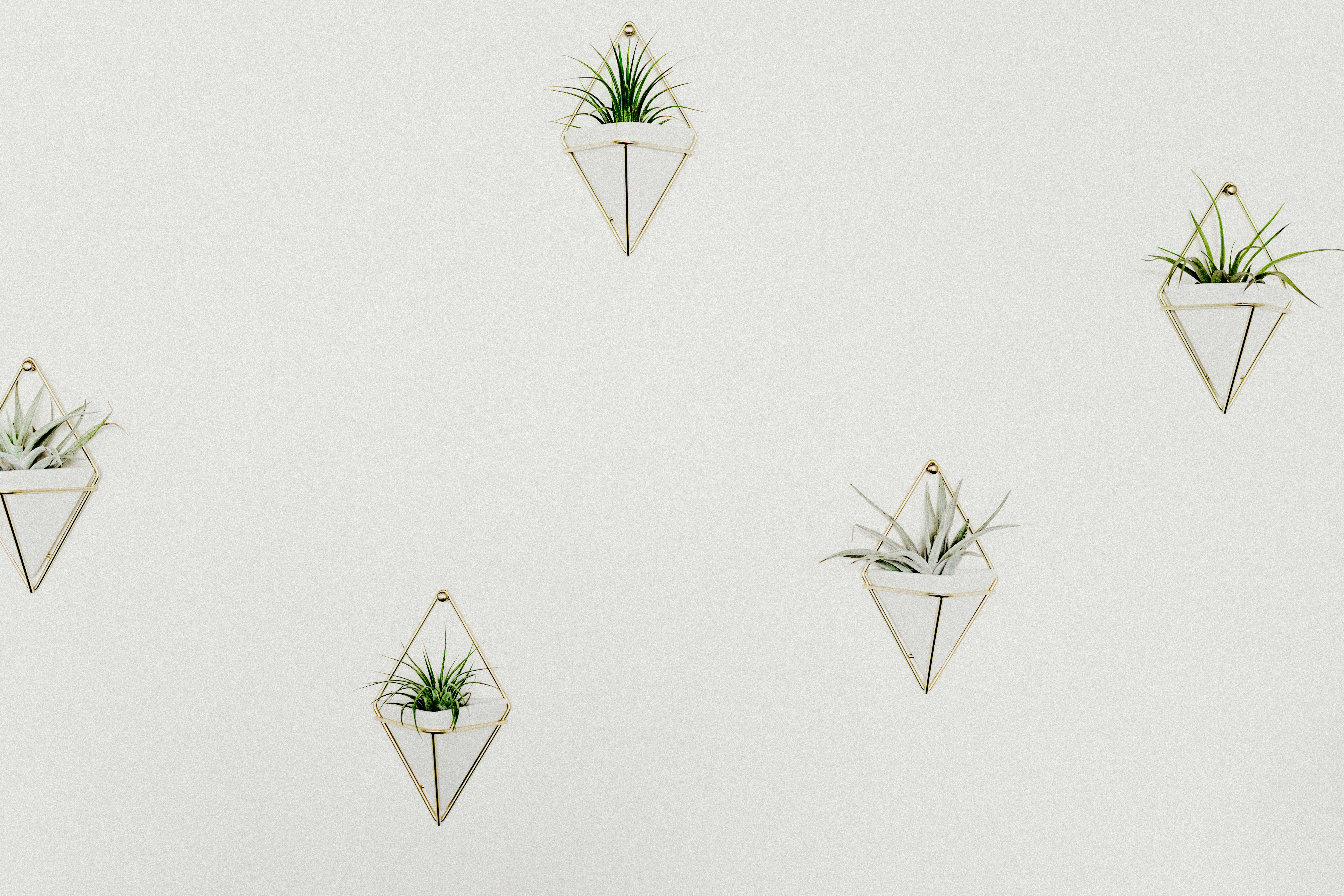 Geometric planters with house plants hang on a white wall