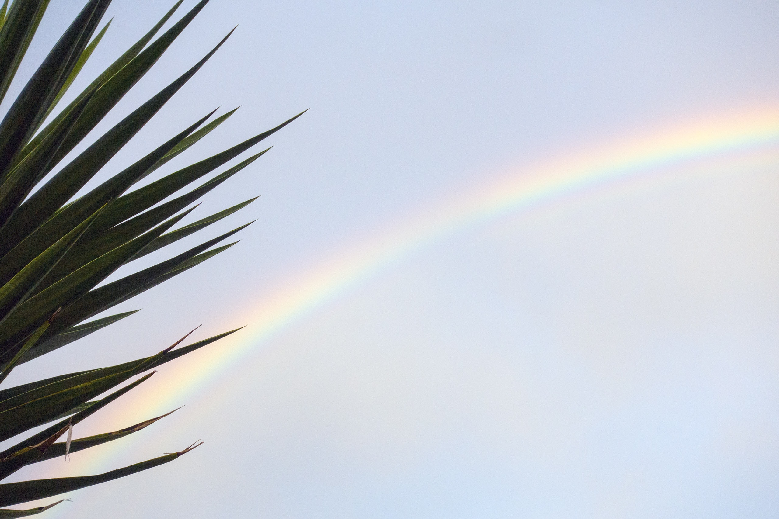 rainbow behind green leaves during daytime
