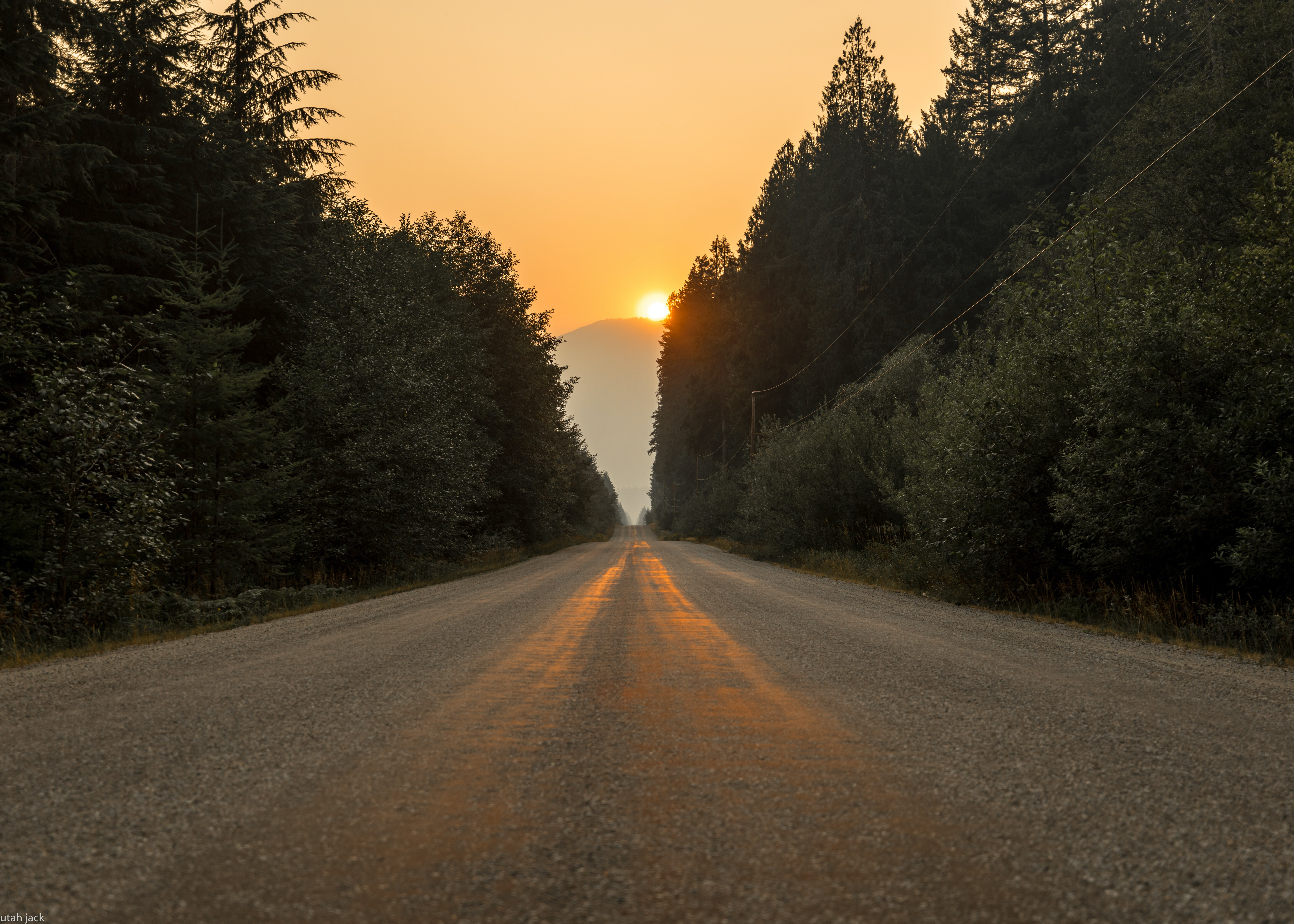 gray dirt road in between trees at sunset