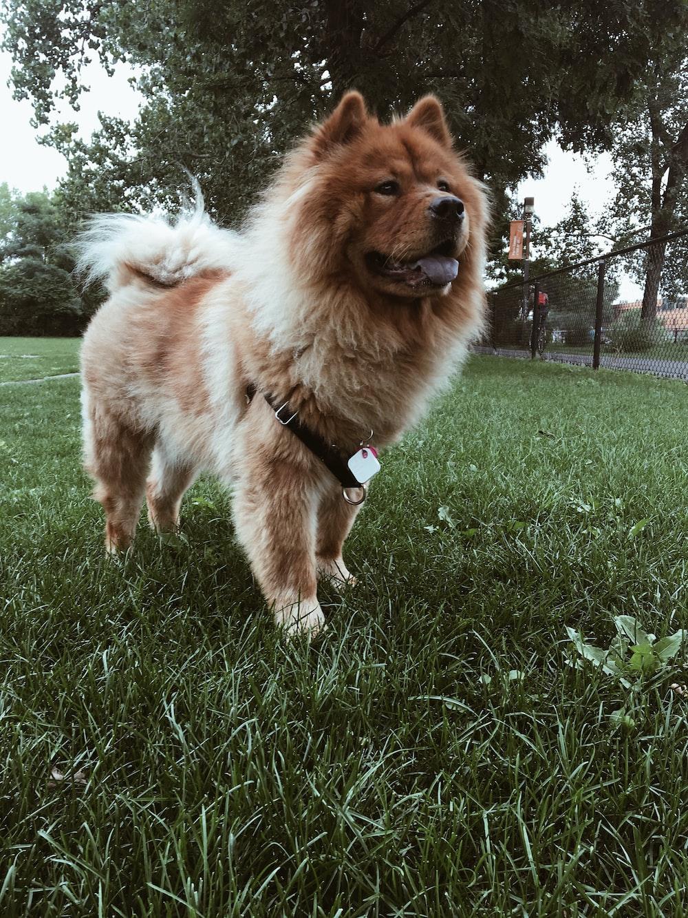 short-coated brown dog during daytime