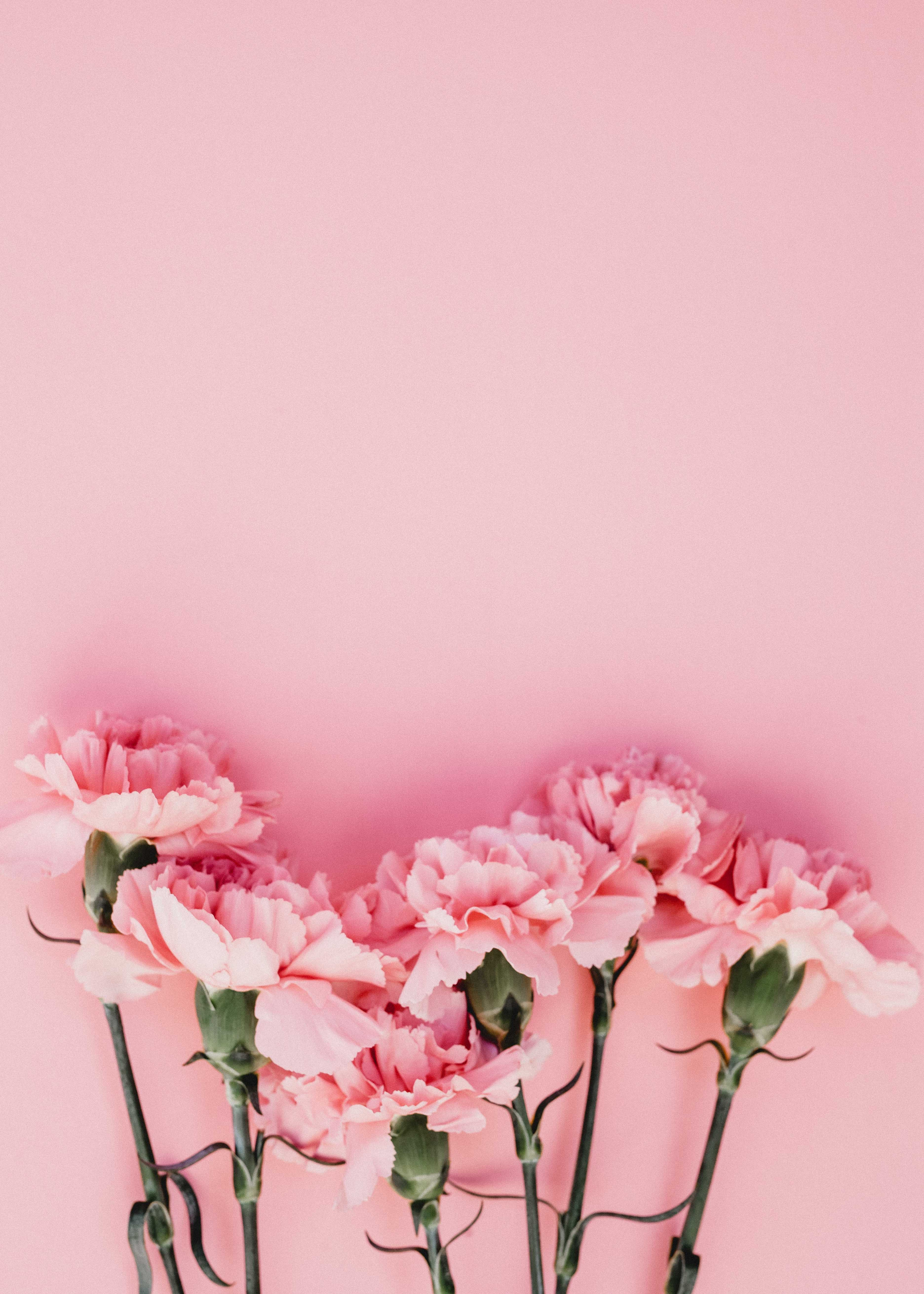 Pink flowers with pink background.