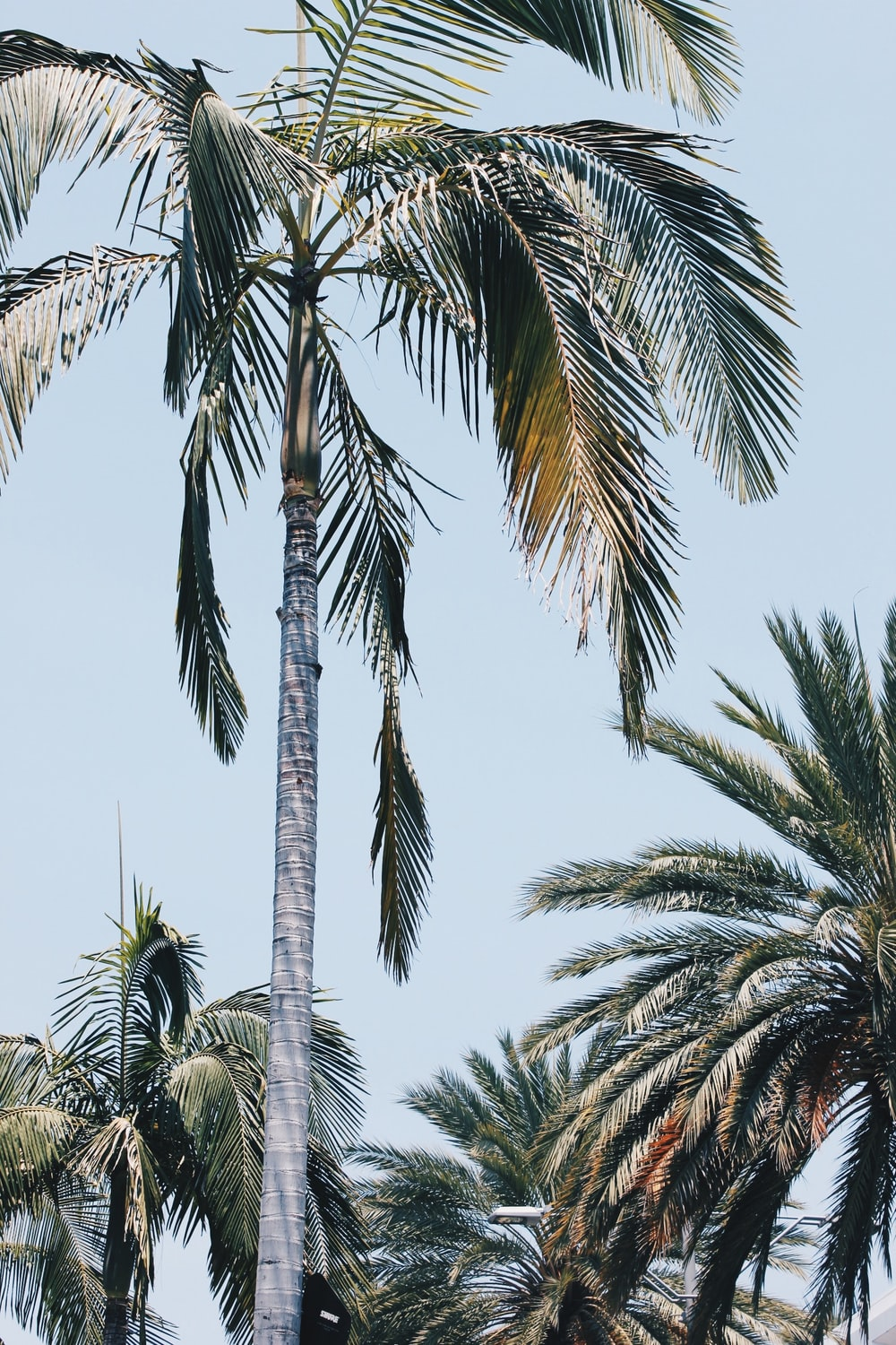 low-angle photo of palm trees under gray sky