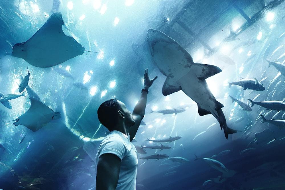 Dubai Aquarium Pictures Download Free Images On Unsplash