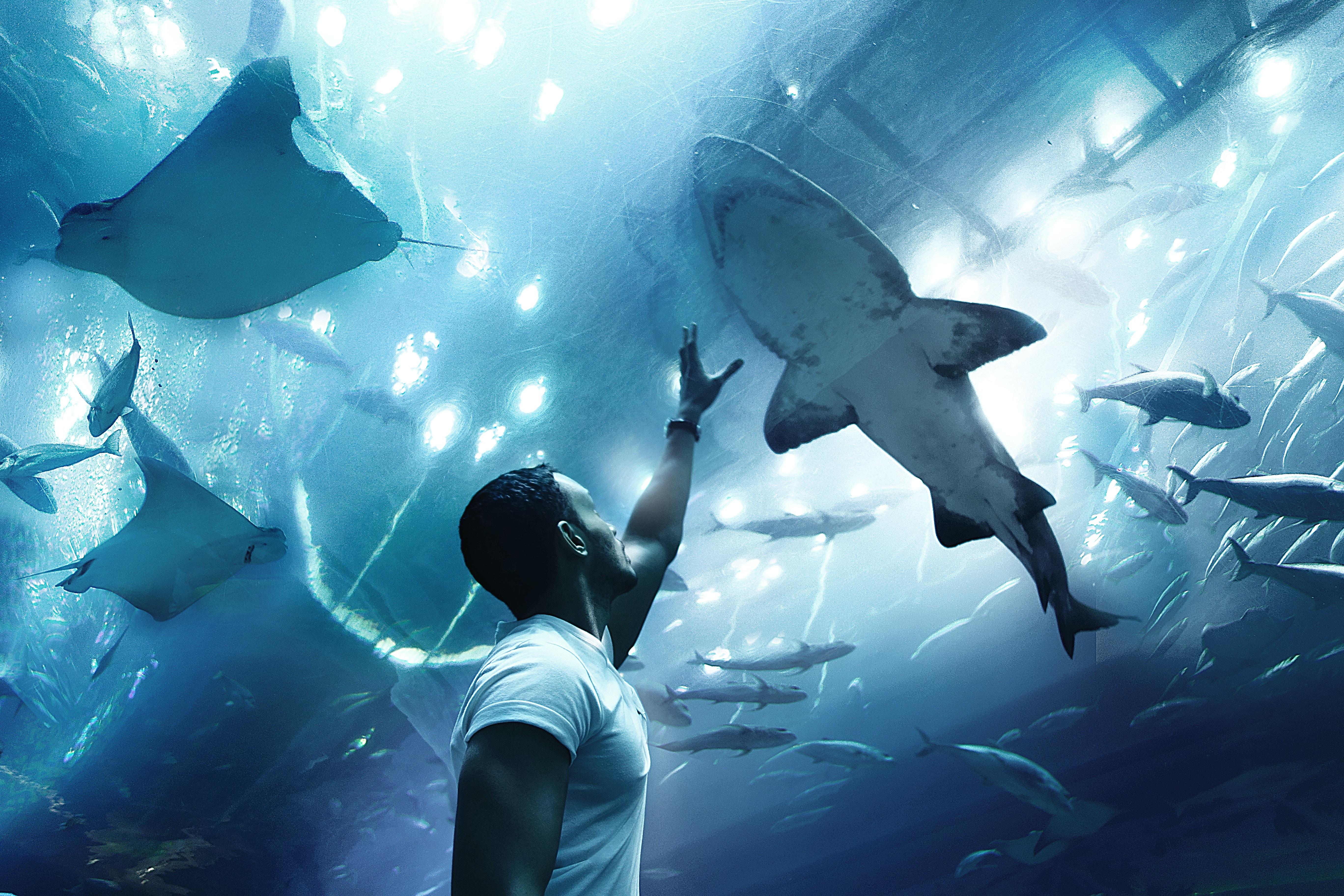 A man raises his hands towards a shark in Dubai Aquarium & Underwater Zoo.