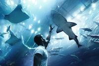 man reaching for shark
