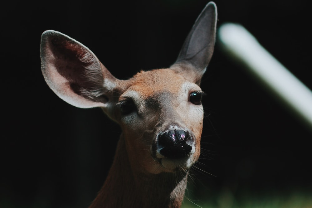 brown deer close-up photo