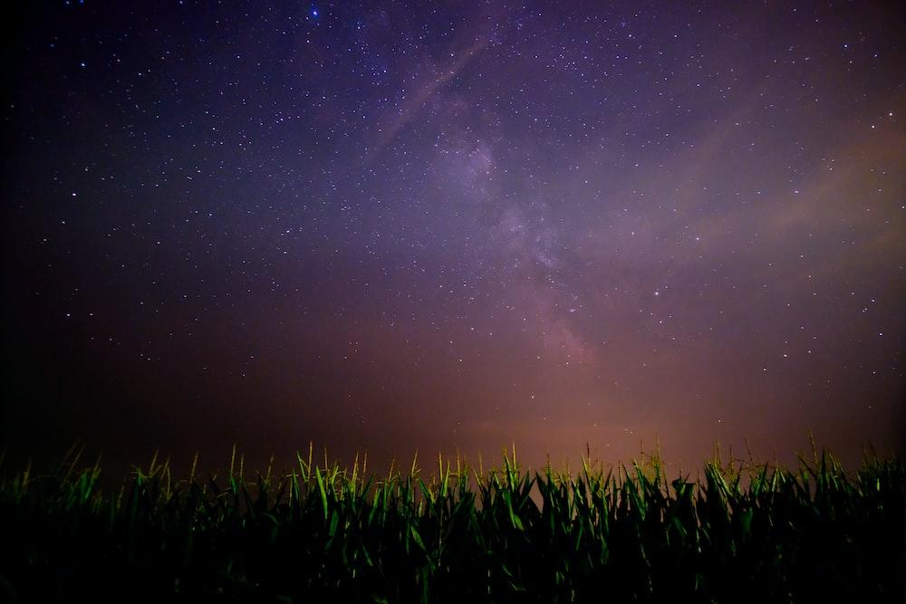 green grass field under night sky