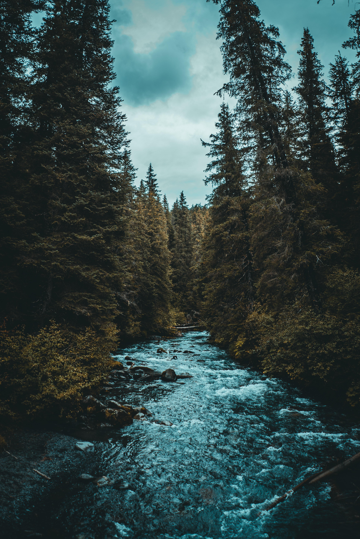river between trees