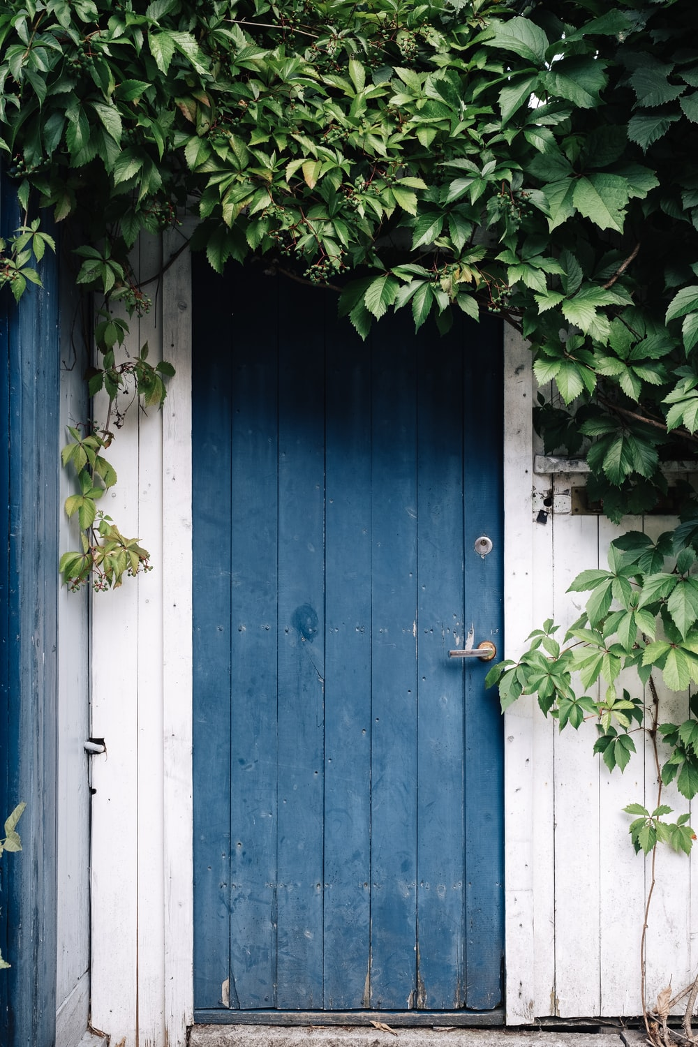 blue wooden door surrounded by green leaves at daytime
