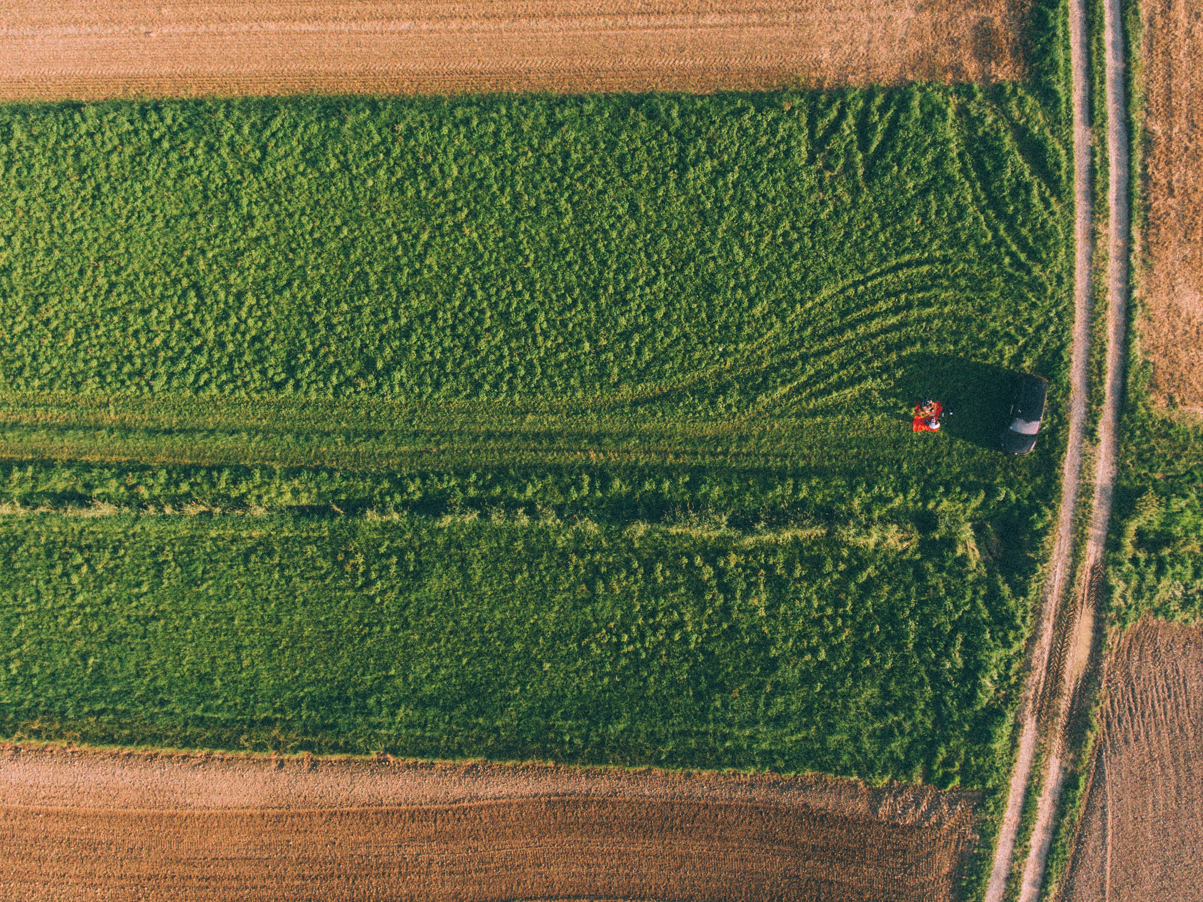 aerial photo of green plants