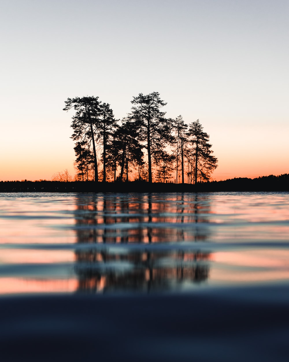 silhouette of trees between body of water and sky