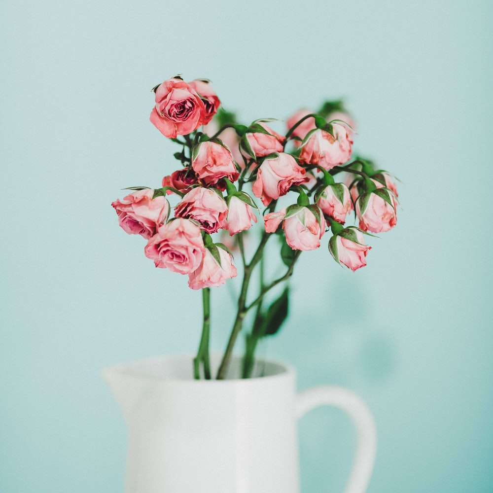 Tiny Roses Photo By Tanalee Youngblood Theheartdept On Unsplash