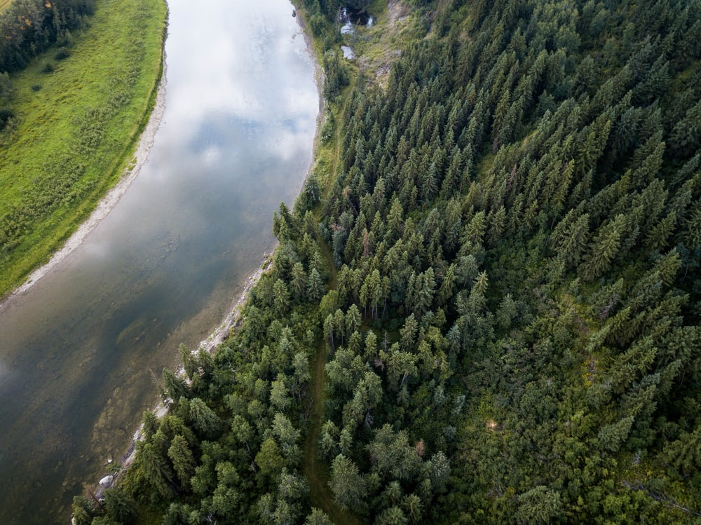 aerial view of pine trees field beside river