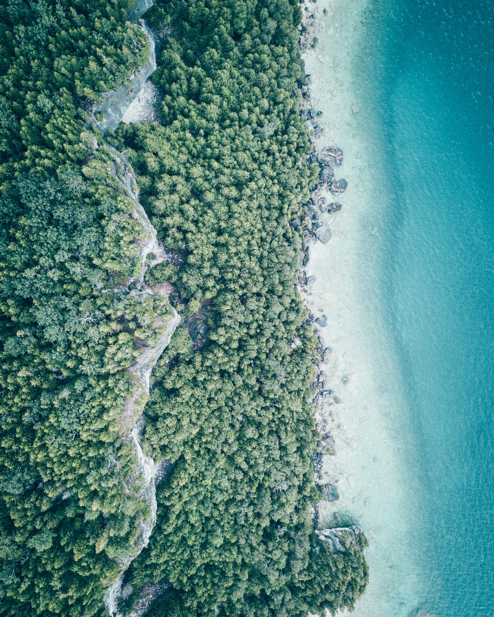 aerial photography of ocean near trees