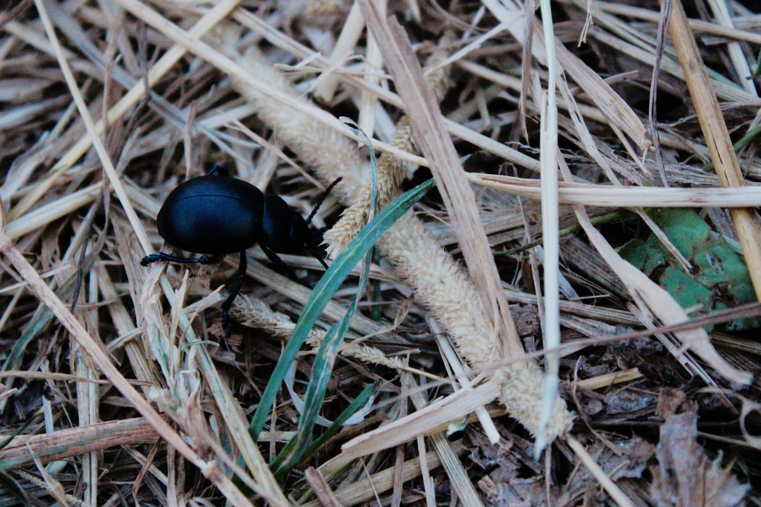 Beatle by grass