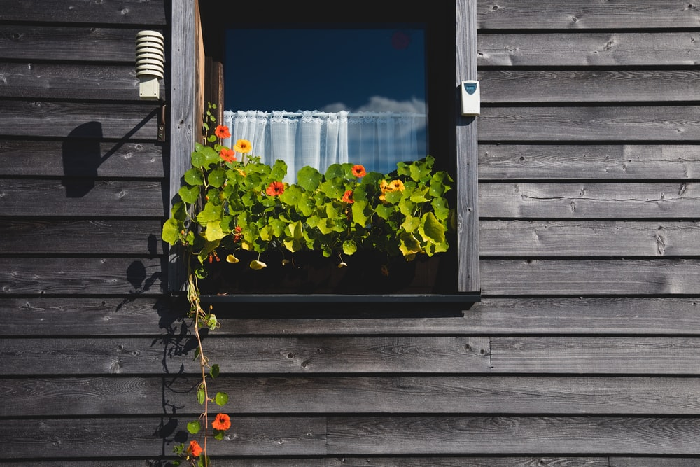 vine flowering plant on window