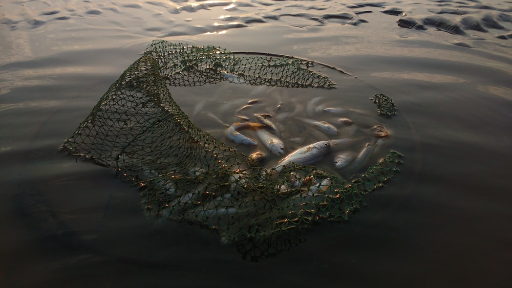 fish on body of water