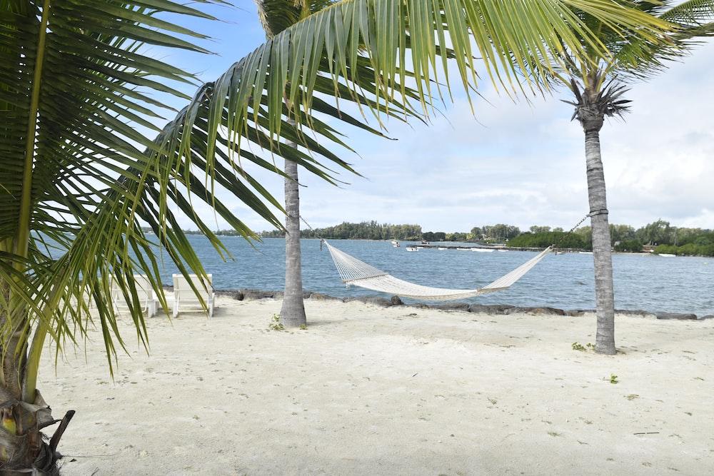 white hammock in between palm tree on seashore