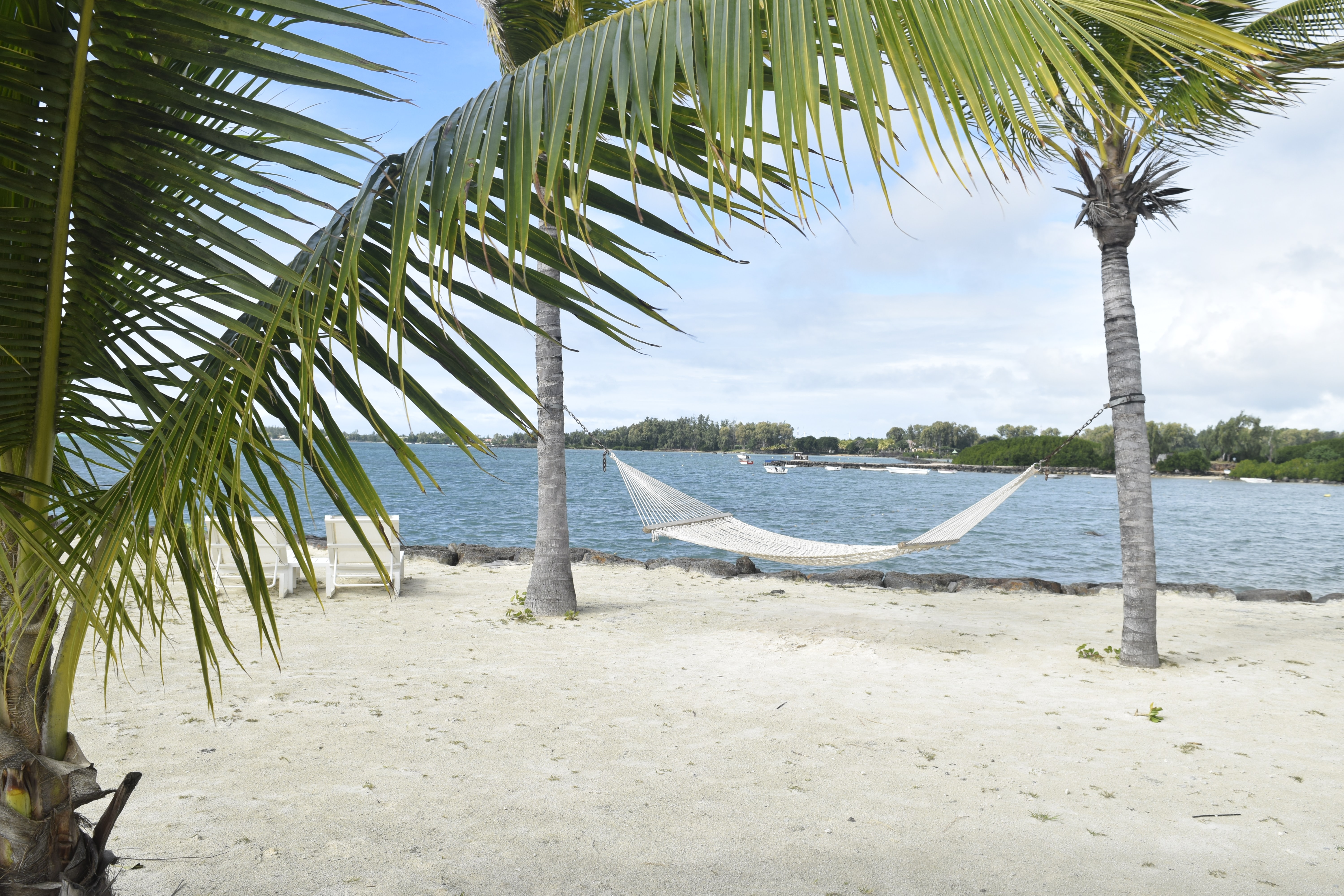 white hammock in between palm tree on seashore