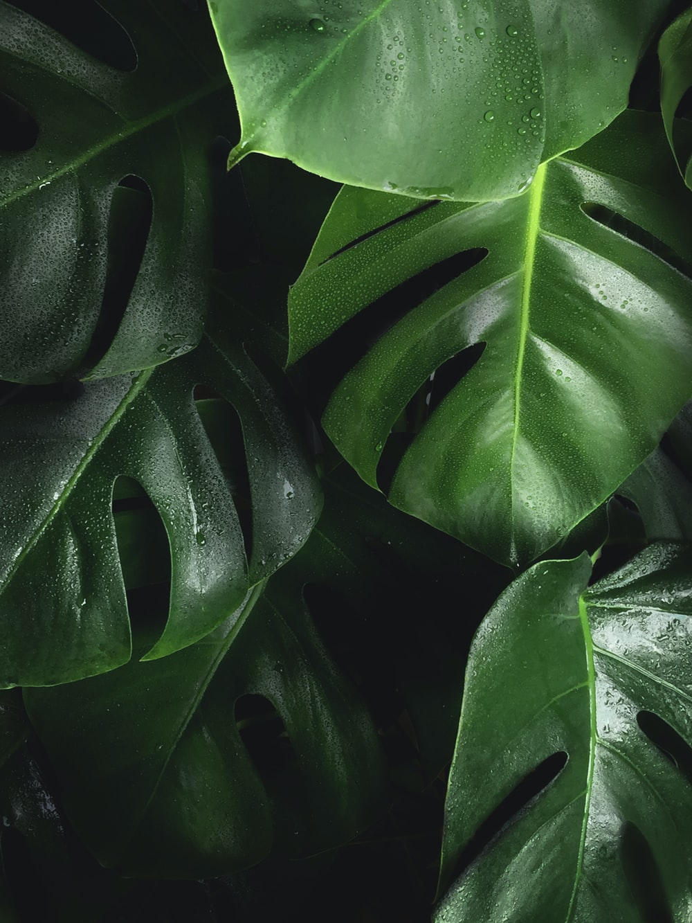 shallow photography of leaves