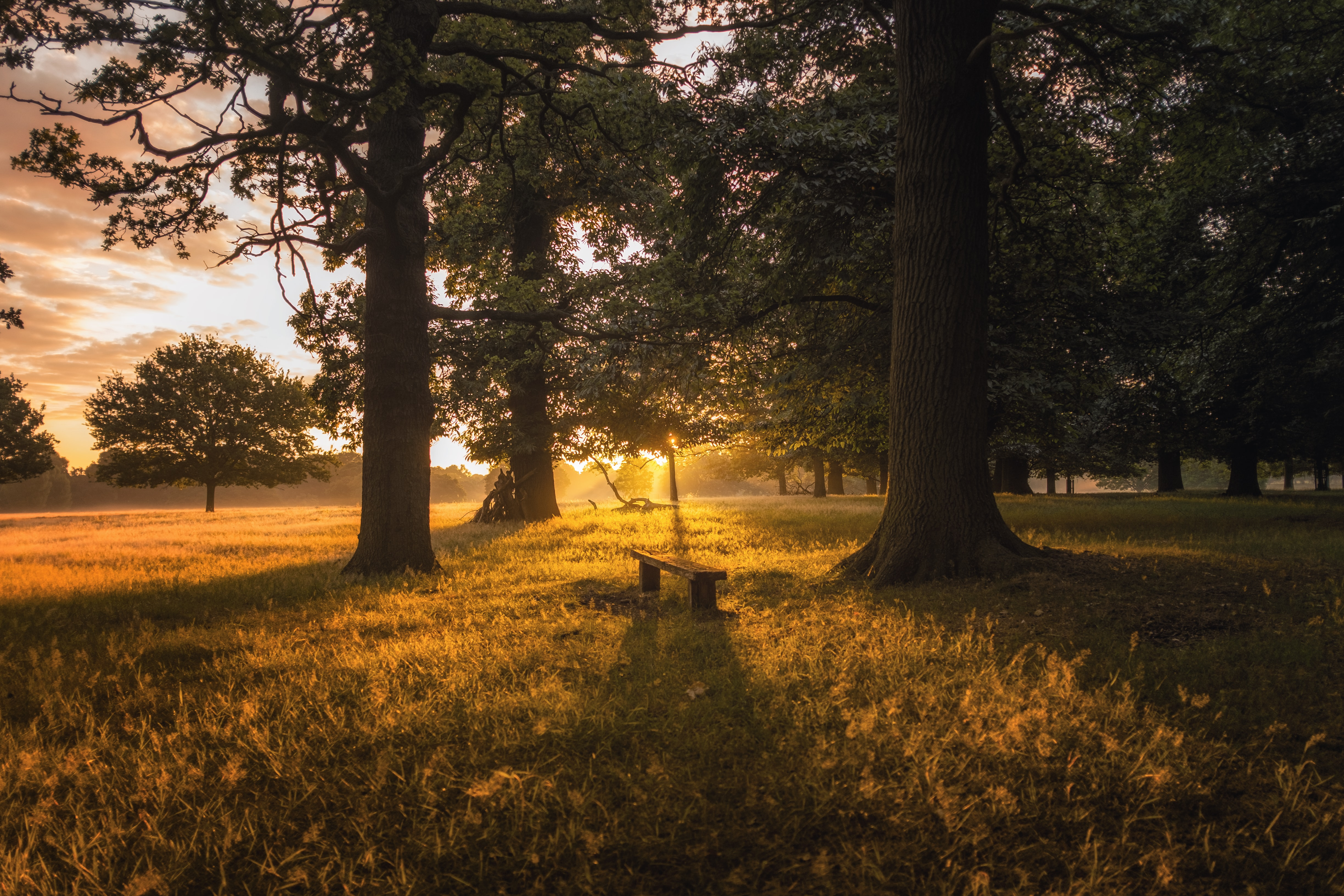 brown bench between two trees during sunset