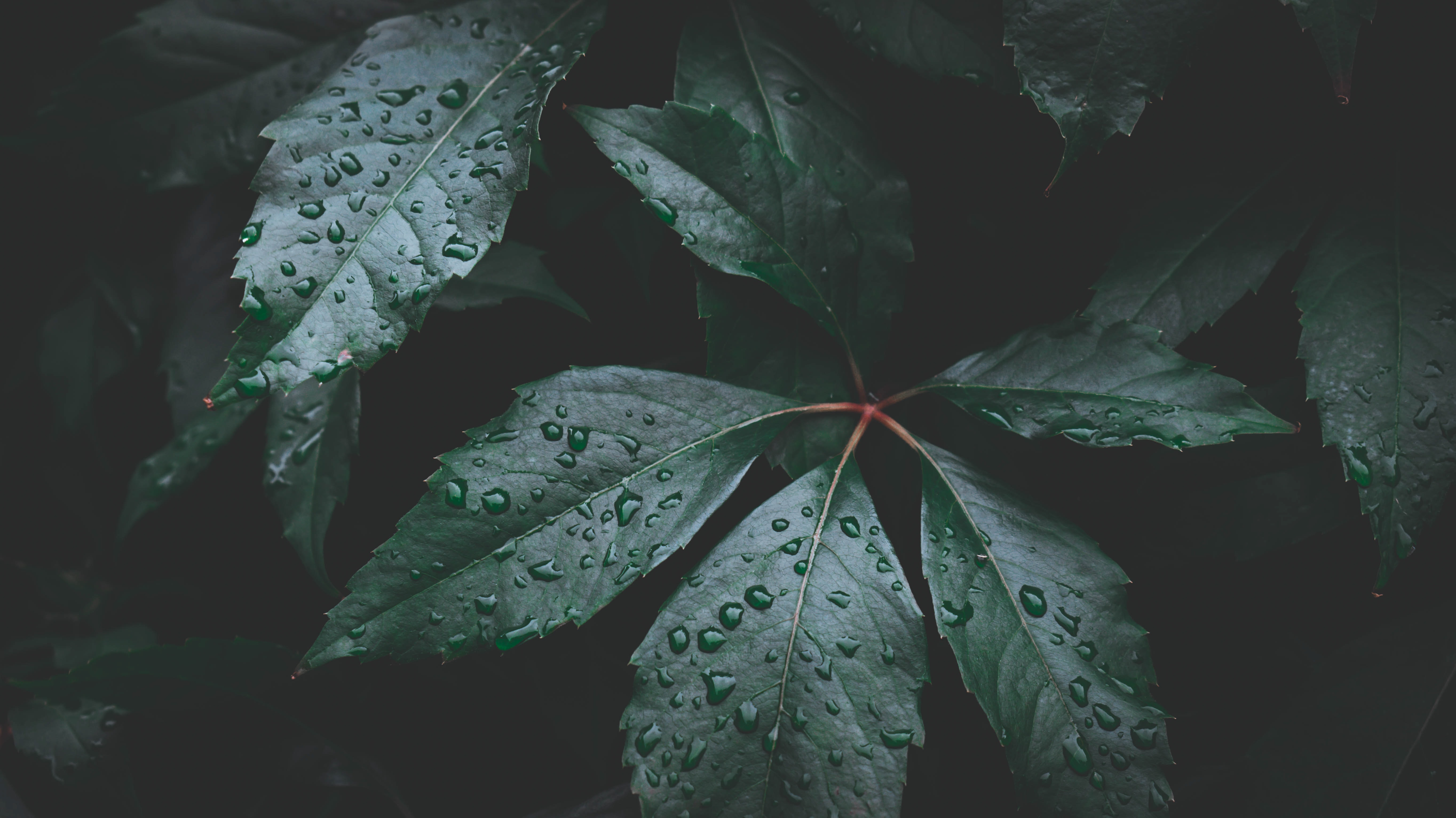 water dew on green leaf plant