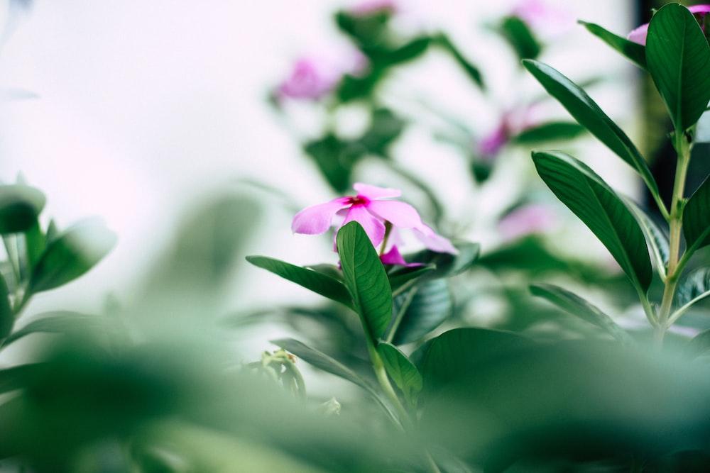 pink flower on macro shot