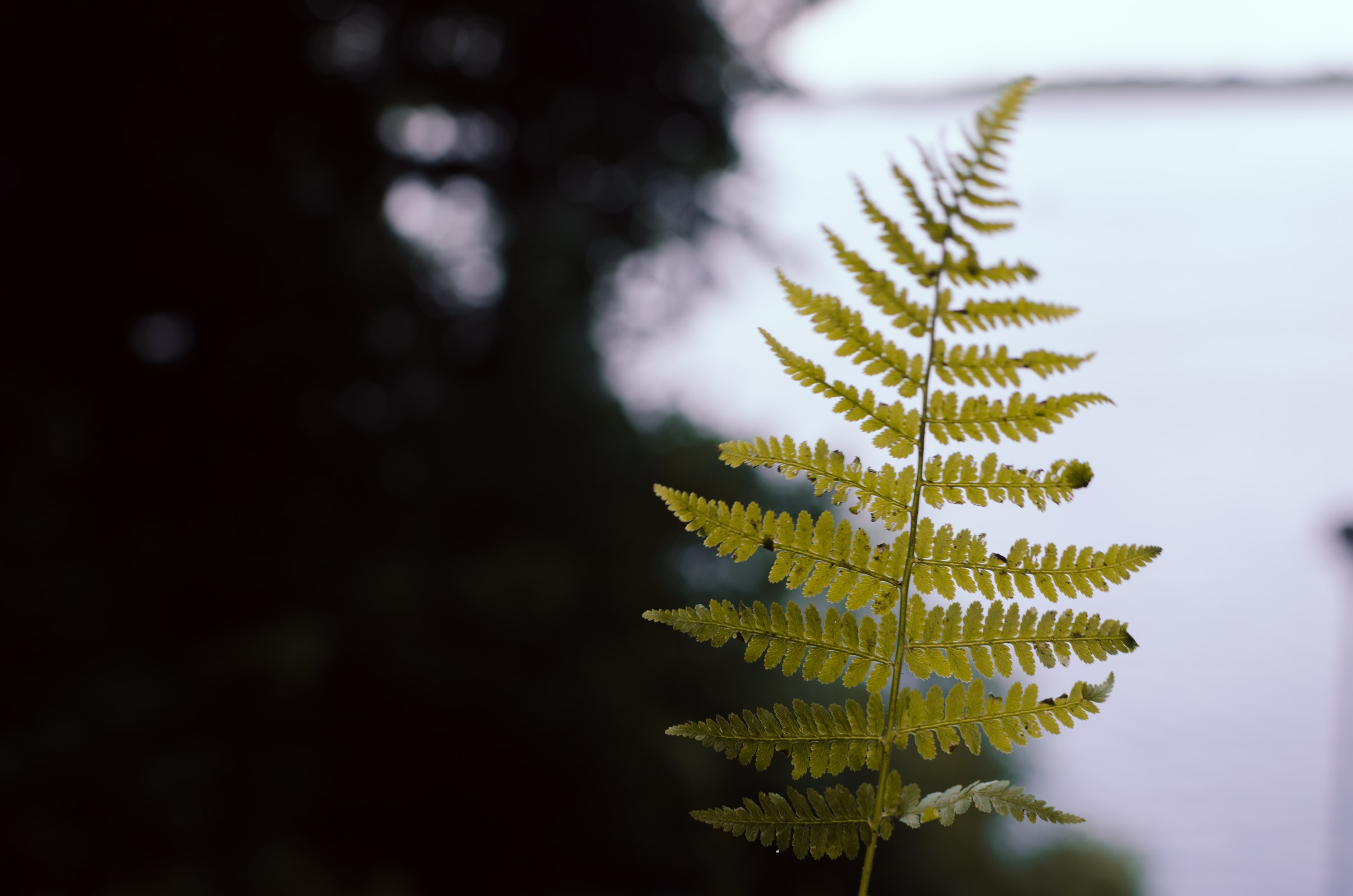 selective focus photography of green fern