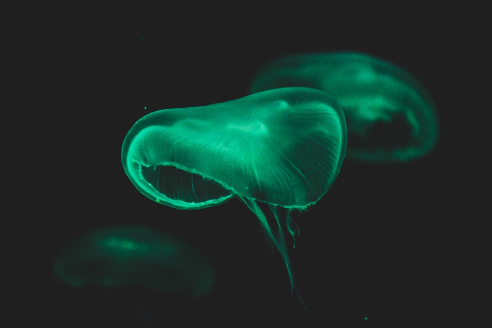 jellyfish close-up photography