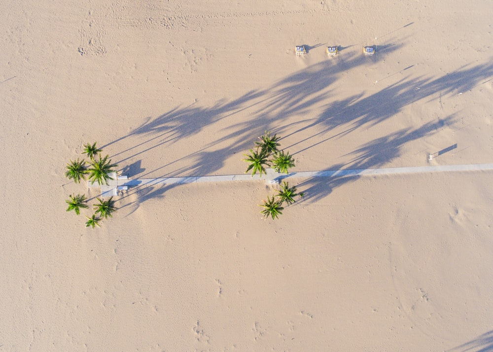 aerial photography of green tree