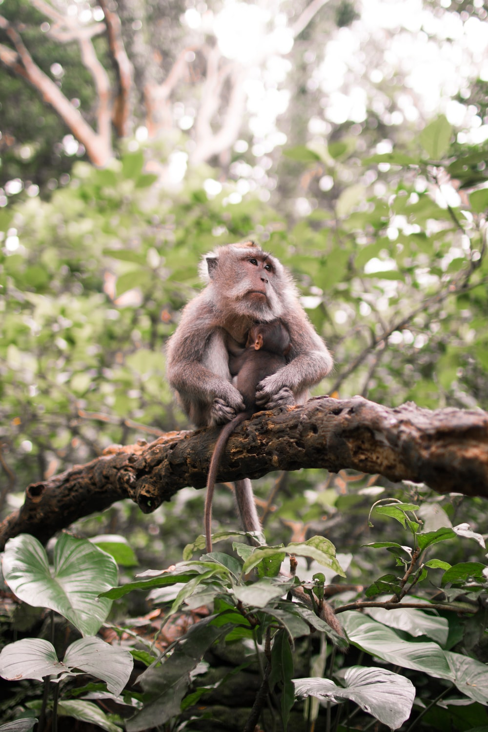 monkey on top of tree branch