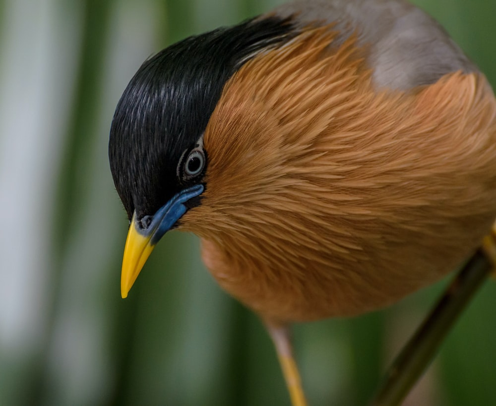 close up photo of brown and black bird