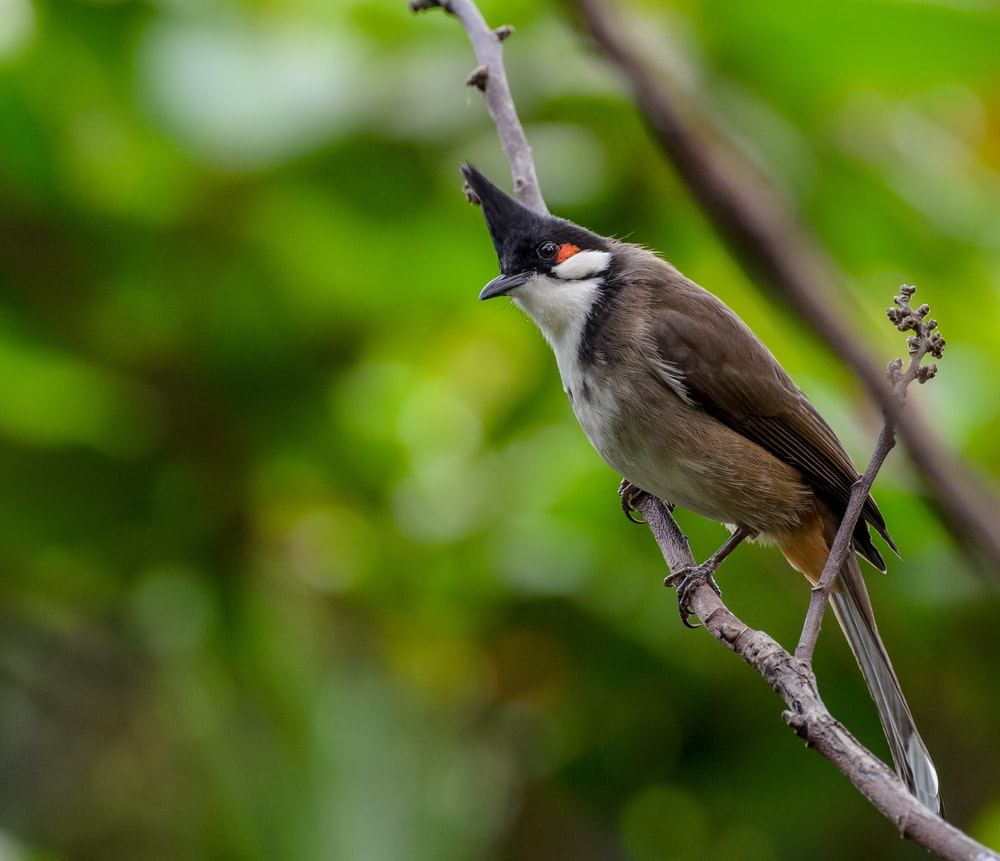 selective focus photography of brown bird on tree branch