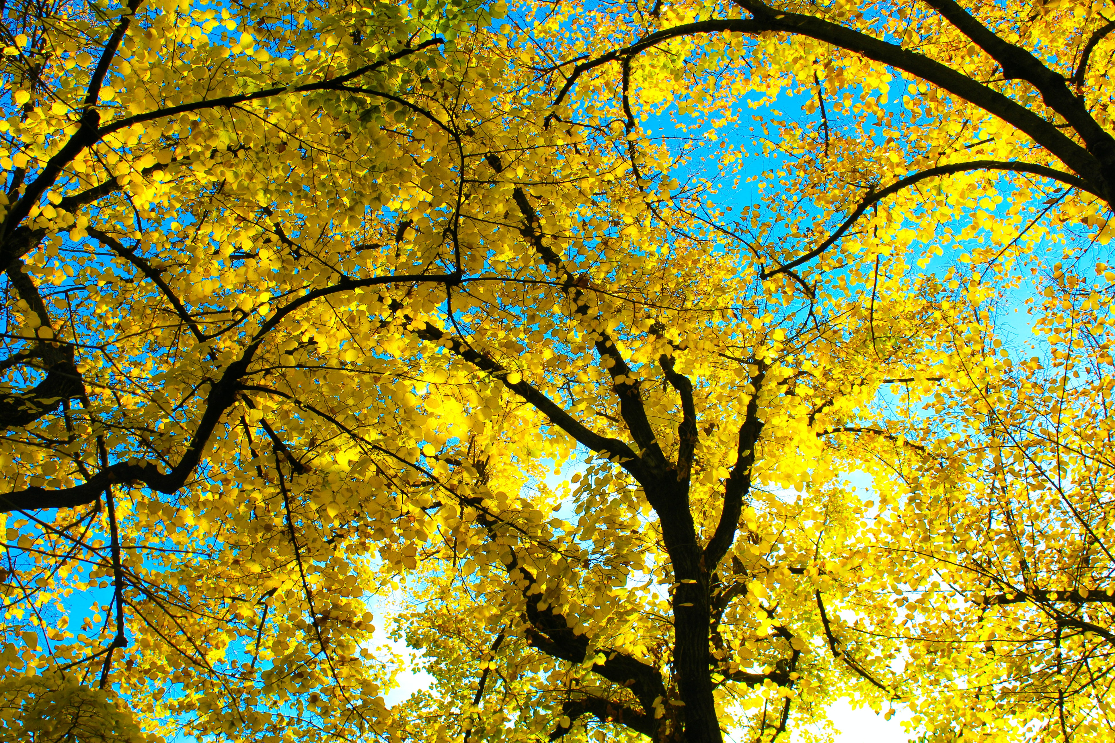 low-angle photography of yellow leafed trees