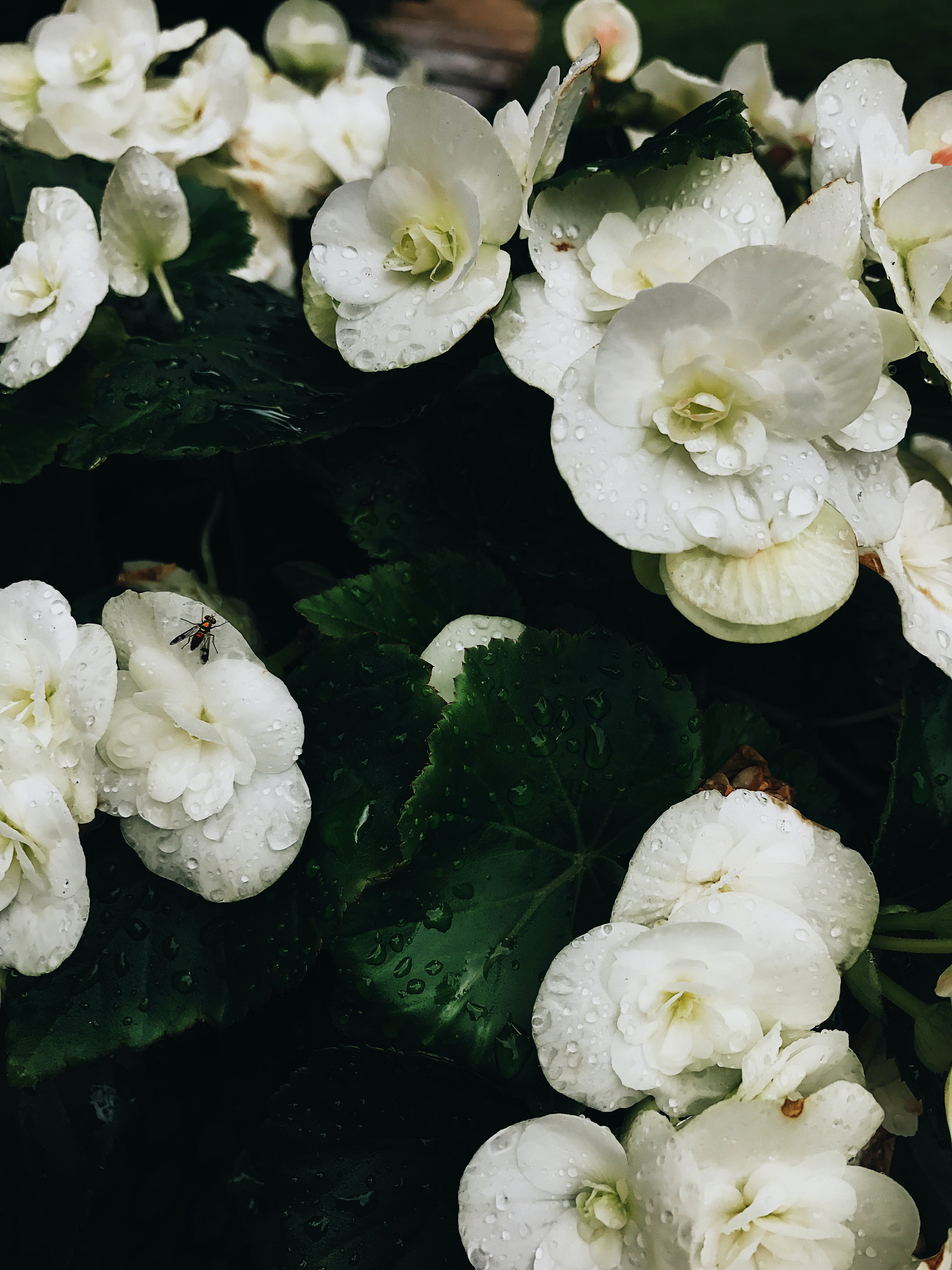 dew filled white petaled flowers
