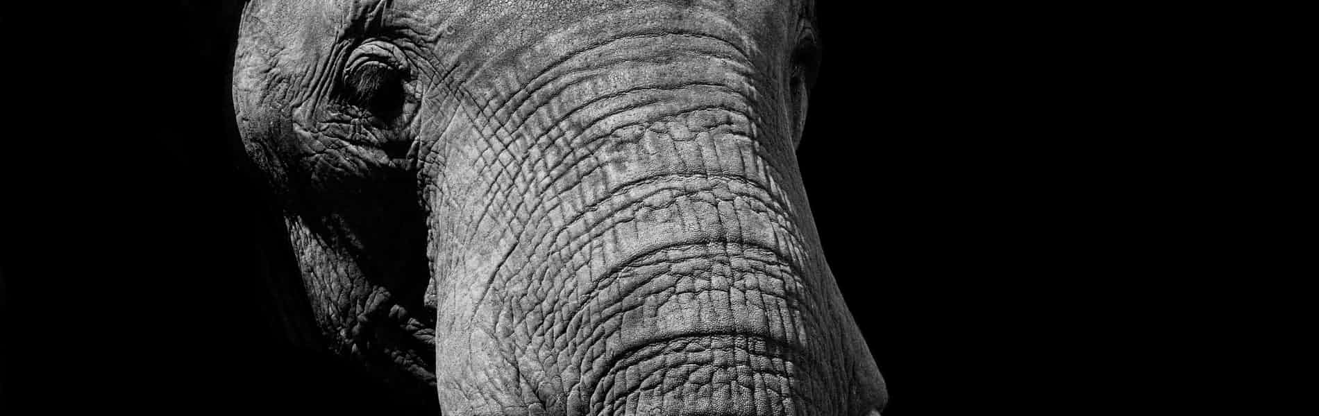 למשש את הפיל: נקודות עיוורות של מטפלים בגישה הפסיכואנליטית /