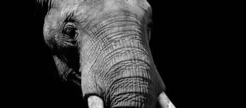 למשש את הפיל: נקודות עיוורות של מטפלים בגישה הפסיכואנליטית / עורך: עמית פכלר